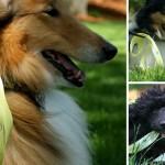 sárga szalag kutya póráz