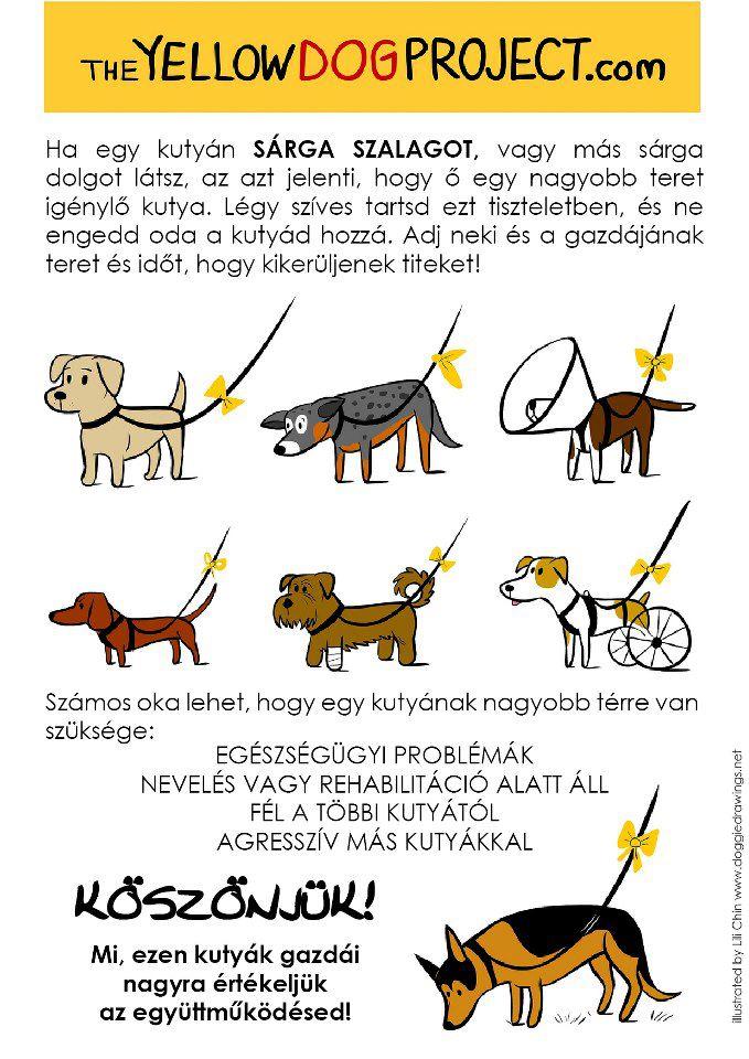 yellow dog magyar szalag sárga